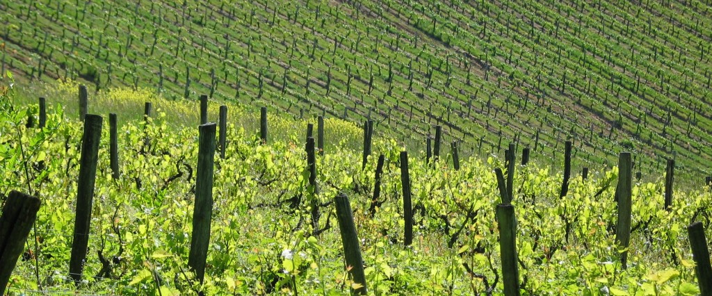 Les vignes et vins de France séduisent aussi les investisseurs étrangers (photo © GPouzin)