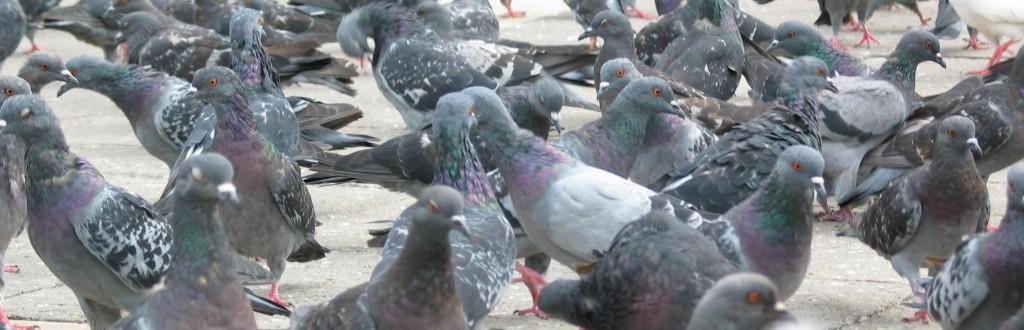 Les consommateurs non plus n'aiment pas être pris pour des pigeons (photo © GPouzin)