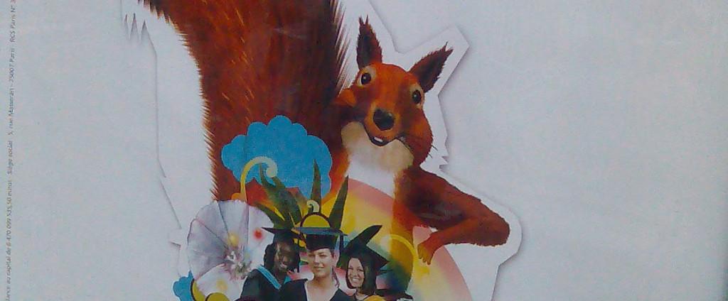 L'écureuil s'affiche. (photo © GPouzin)