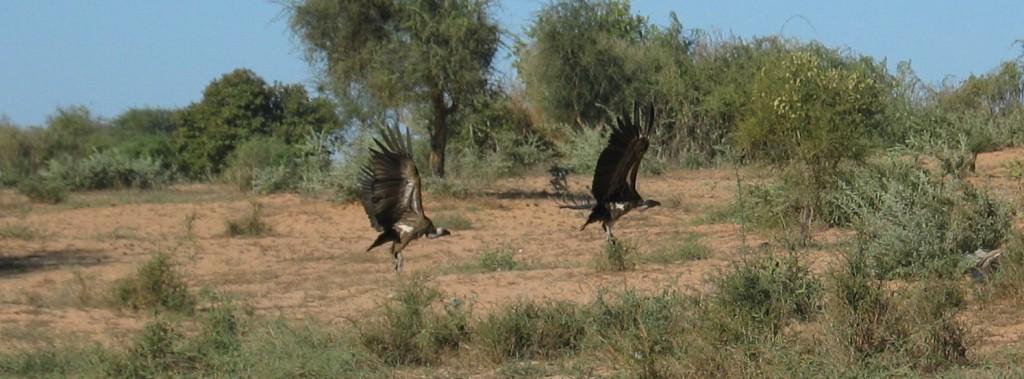 """Les fonds """"vautours"""" (ou vulture funds) rachètent au rabais des obligations décotées d'emprunteurs moribonds, en espérant profiter d'un plan de sauvetage pour obtenir leur remboursement et faire une belle plus-value.  (photo © GPouzin)"""