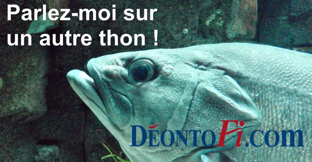 Parlez-moi sur un autre thon ! (photo © GPouzin)